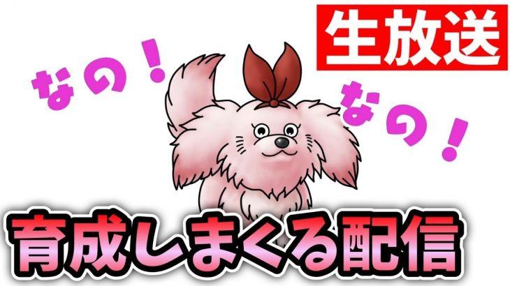 【ドラクエタクト 】ランクアップ素材乱獲祭【無課金攻略】