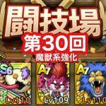 【ドラクエタクト】第30回闘技場4日目。ベビパンでキングレオを倒す!
